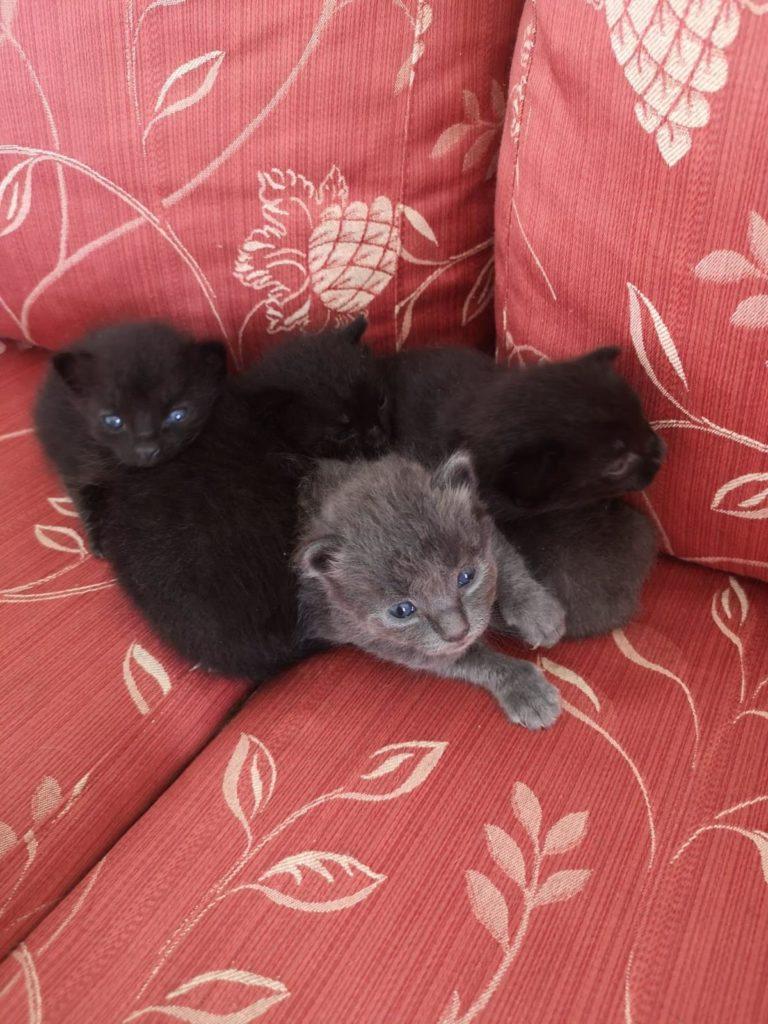 tre gatti