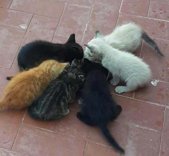 Questa immagine ha l'attributo alt vuoto; il nome del file è gatti-di-strada.jpeg
